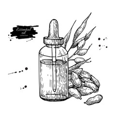 Cardamom essential oil bottle and cardamom seeds vector