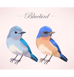 Cute bluebird vector