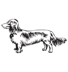 decorative standing portrait of dog long-haired vector image vector image
