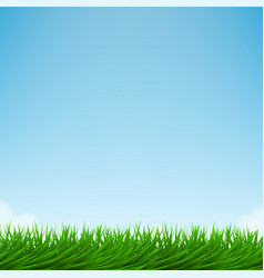 green grass and bright blue sky vector image vector image