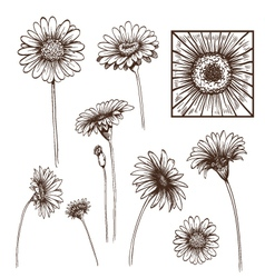 Hand drawn gerber flower set vector