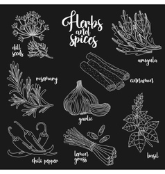 Spices and herbs set Contour on dark vector image vector image