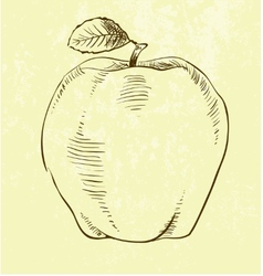 Hand drawn apple vector
