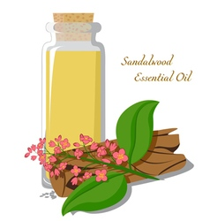 Essential oil of sandalwood vector