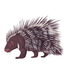 Porcupine isolated vector