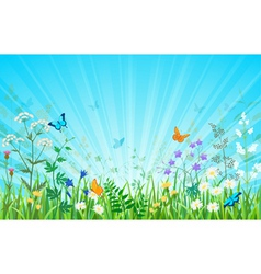 Sunny meadow horizontal version vector