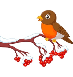 Cartoon beautiful robin bird posing on the berry vector