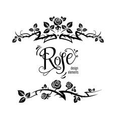 elegant roses design vector image