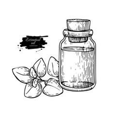 Oregano essential oil bottle and oregano leaves vector