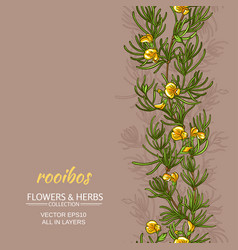 rooibos background vector image