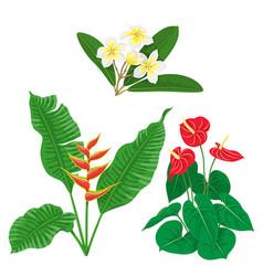 tropic flowers set vector image vector image
