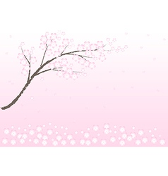 Cherry blossom in spring time background vector