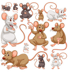 Seamless background with many rats vector
