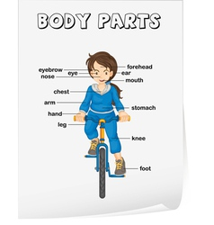 Body parts diagram poster vector