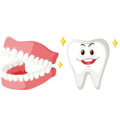Clean teeth of human vector