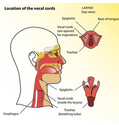 Vocal cords vector