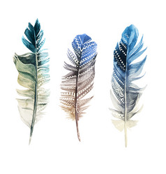 Hand drawn watercolor feathers with ornaments vector