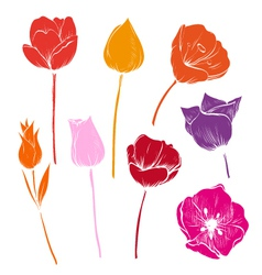 Set of tulips colorful vector