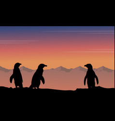 At night penguin silhouette beauty landscape vector