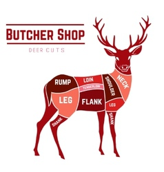 Deer meat cuts in color vector image