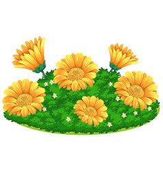 Calendular flowers in bush vector