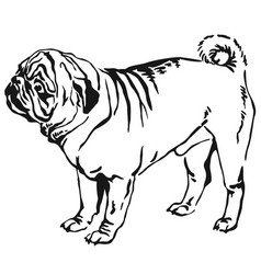 decorative standing portrait of dog pug vector image vector image