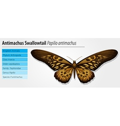 Giant african swallowtail vector