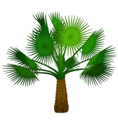 palm tree cartoon for you design vector image