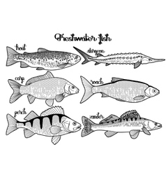 Graphic freshwater fish collection vector