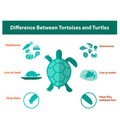 Difference between tortoises and turtles vector
