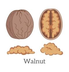 Walnut kernels vector