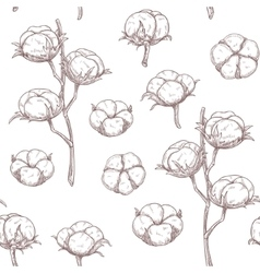 Cotton flowers seamless pattern vector image
