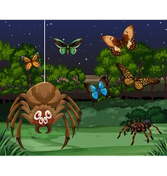 Butterflies and spider at night vector image vector image