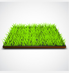 Square of green grass field vector