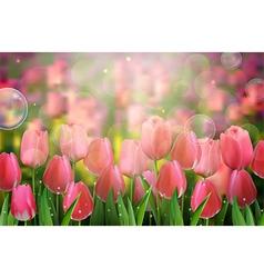 Red tulips flowers in the garden vector image
