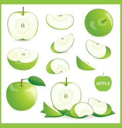 set of green apple in pieces whole slice half vector image