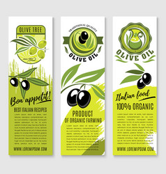 Banners of olives and italian olive oil vector