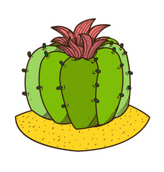 Blooming cactus colored plants logo on a white vector