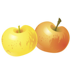 two yellow apples isolated on white background vector image vector image