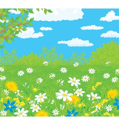 Field with flowers vector