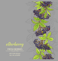 Elderberry background vector