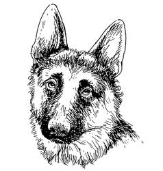 German shepherd 01 vector