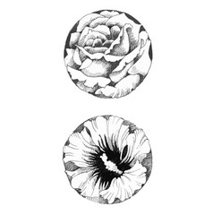 hand drawn flower buds on white background vector image