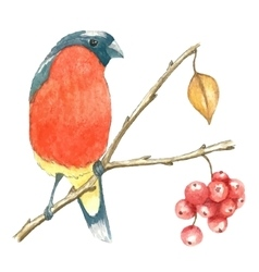 The bullfinch sits on the tree branch vector image vector image