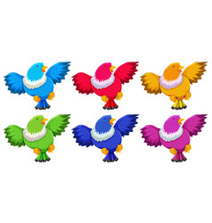 birds with six colors on white background vector image