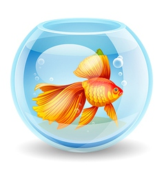 goldfish in an aquarium vector image vector image