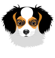 Puppy isolated on white background vector