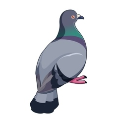 Pigeon isometric icon vector