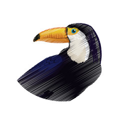 Exotic bird icon image vector