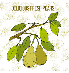 pear branch with fruit seamless background vector image